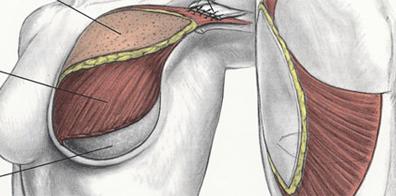 Мышцы груди у женщин